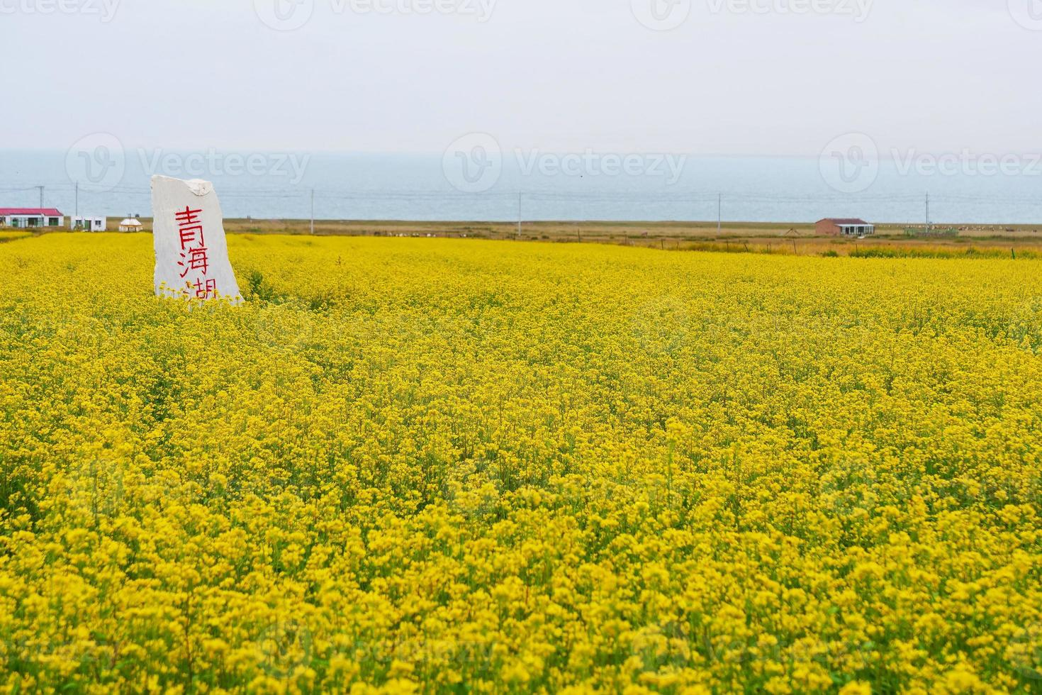 Stone mounment and rape flower in Qinghai Province China photo
