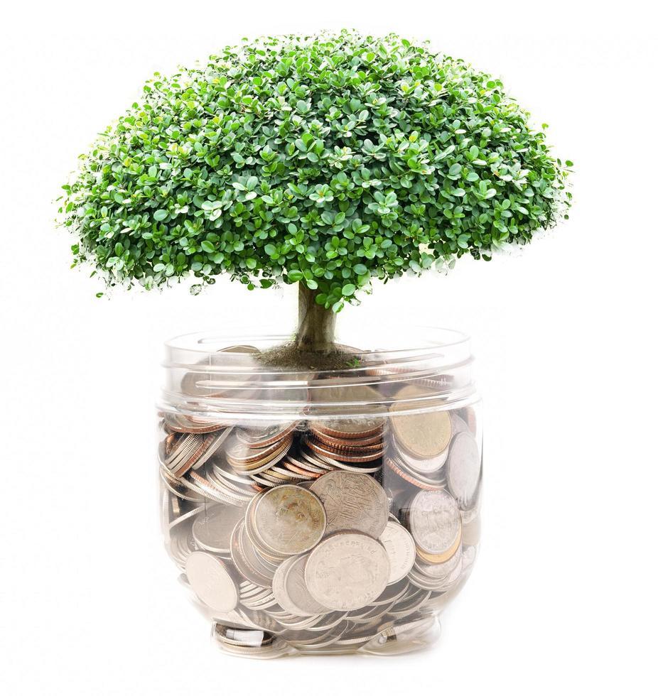árbol en el ahorro de monedas, banca comercial financiera foto