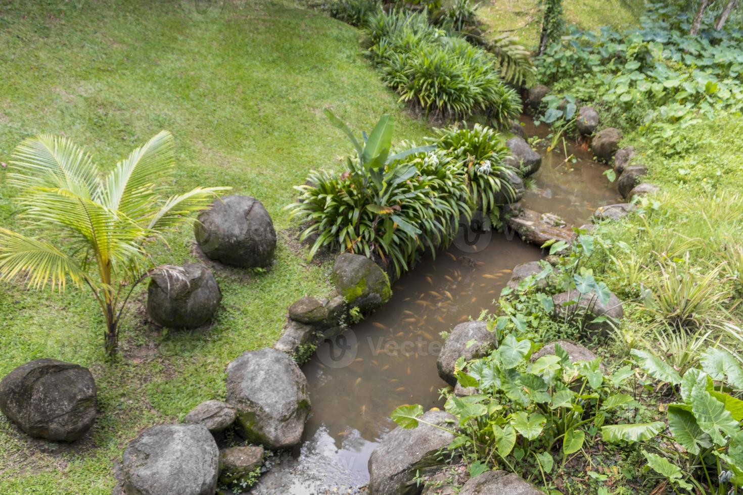 Río tropical en los jardines botánicos de Perdana, Kuala Lumpur, Malasia foto