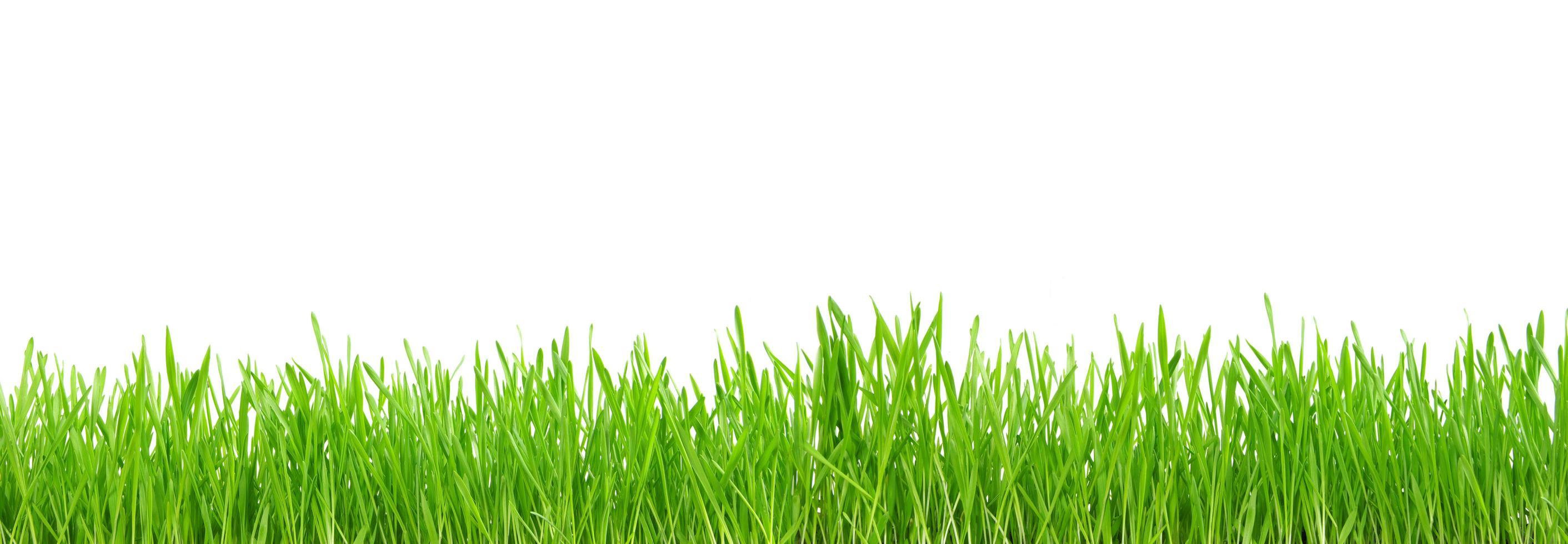 pasto verde aislado sobre fondo blanco foto