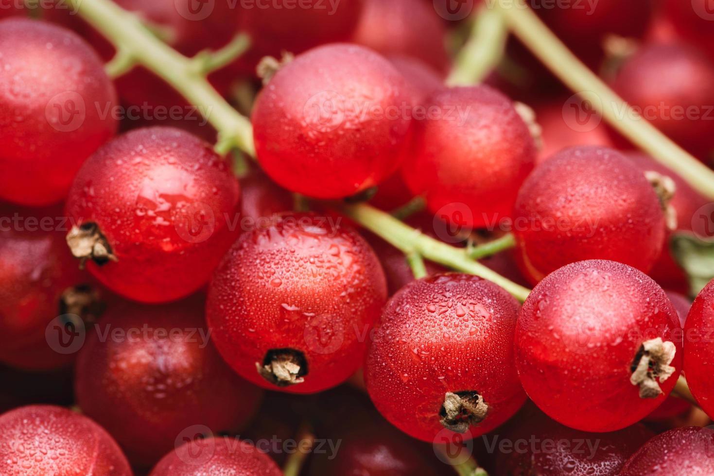 bayas de grosella roja con gotas de agua foto