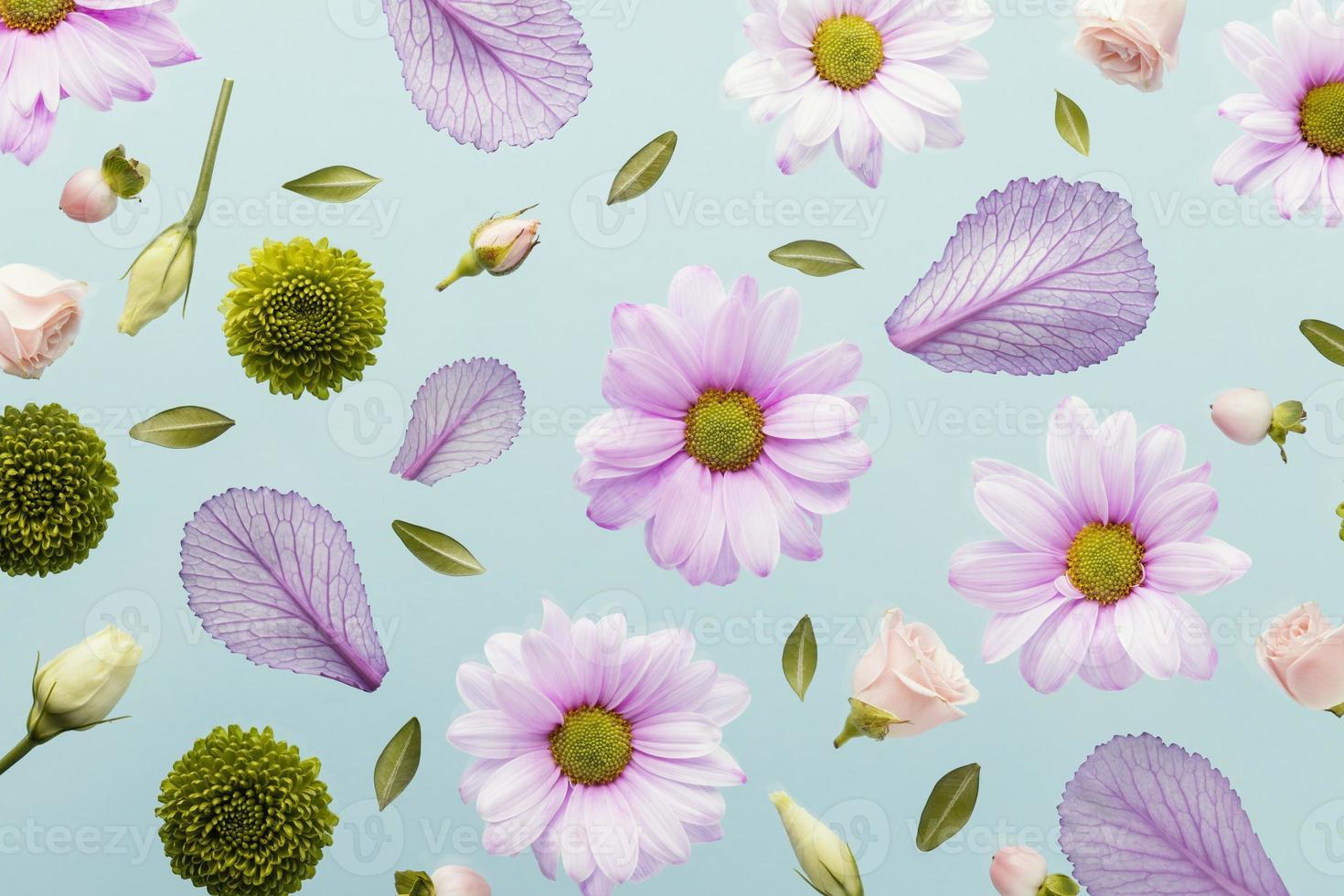 margaritas y hojas de primavera foto