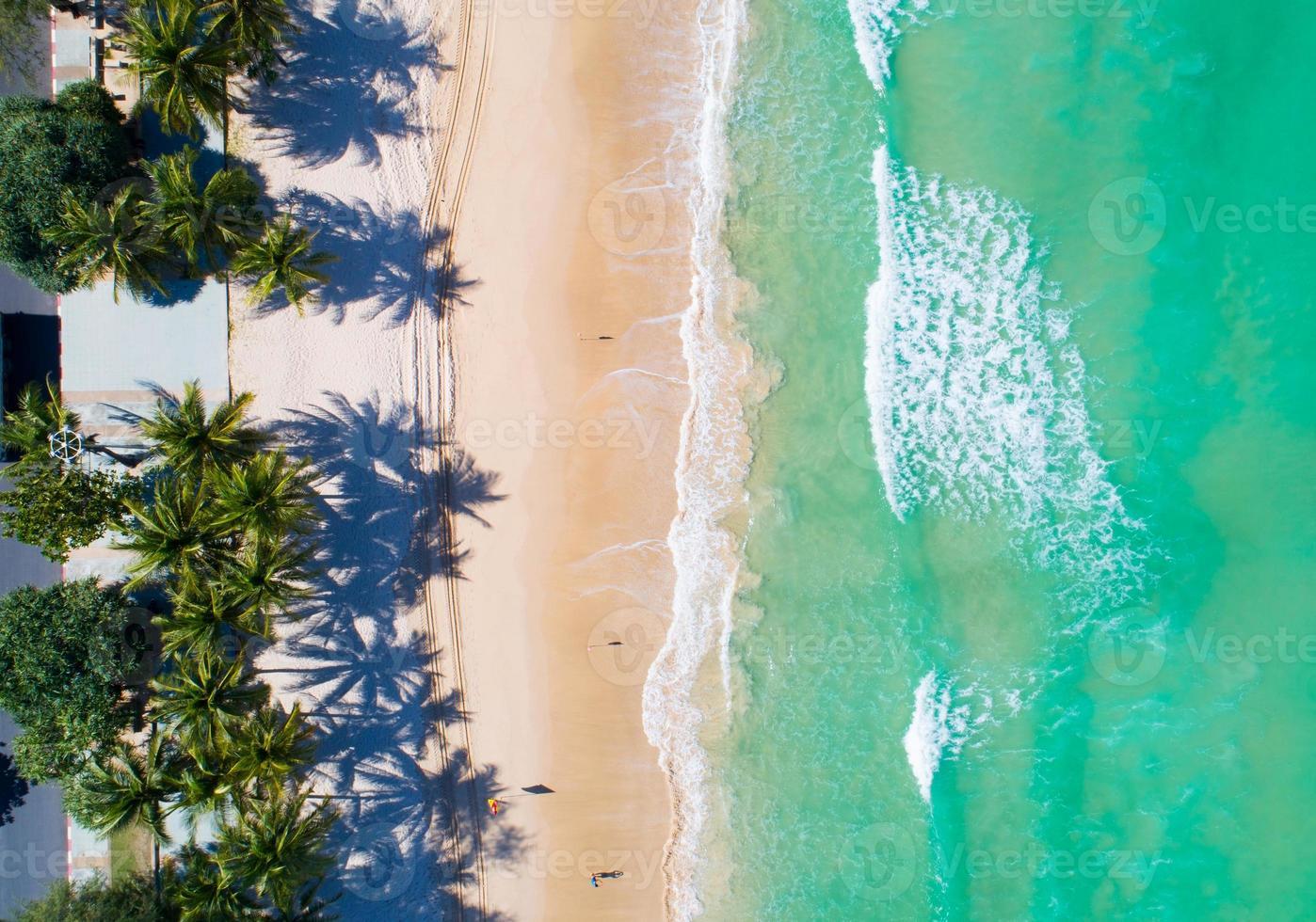 vista aérea de arriba hacia abajo de las palmeras de coco foto