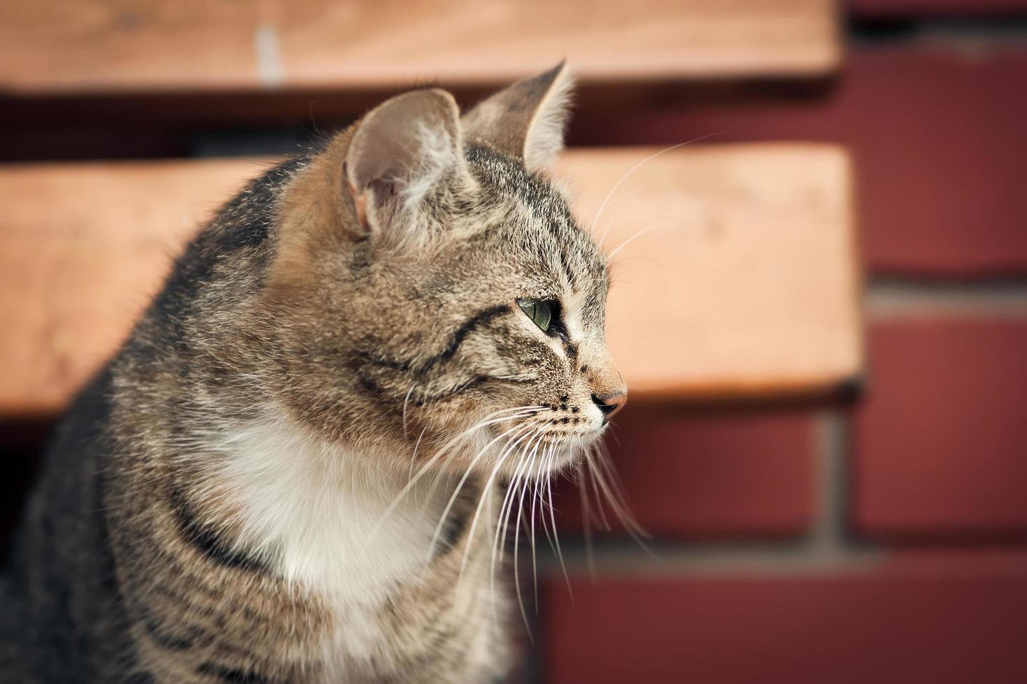 gato ante una pared foto