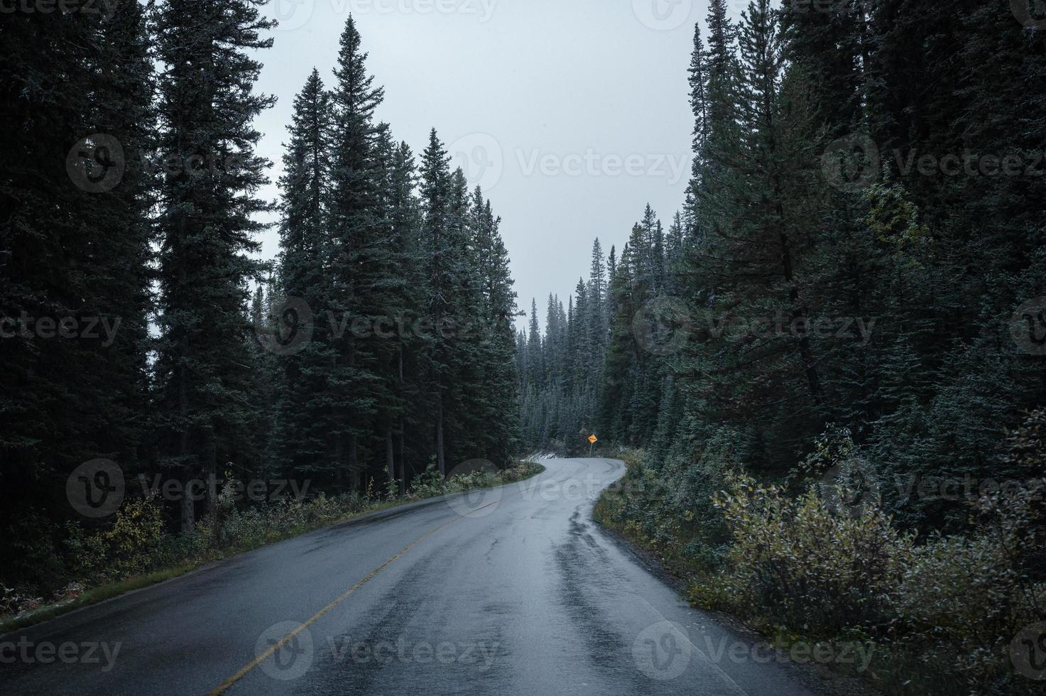 Asphalt highway curved in pine forest on gloomy at national park photo