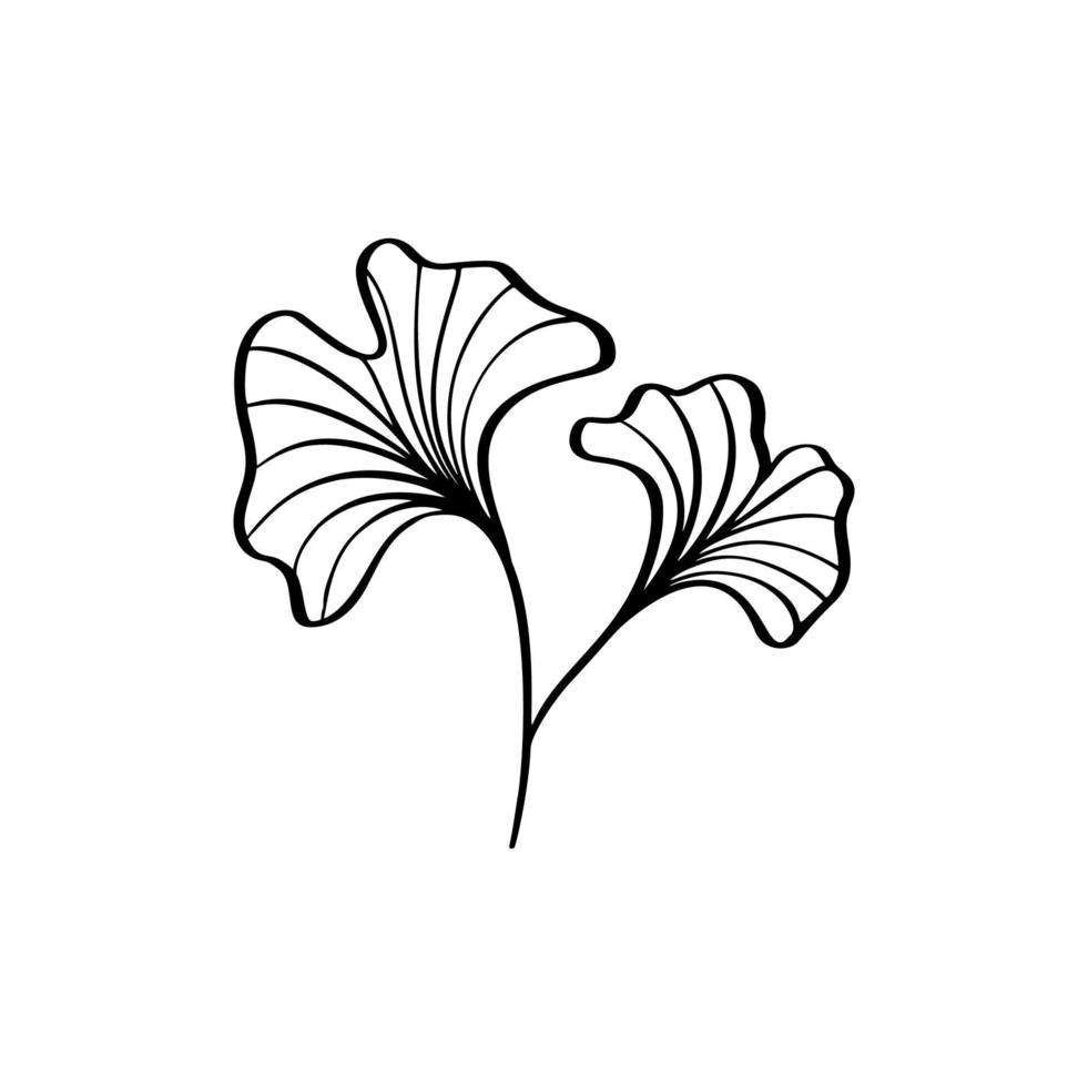 Ginkgo leaf hand draw vintage clip line art isolated vector