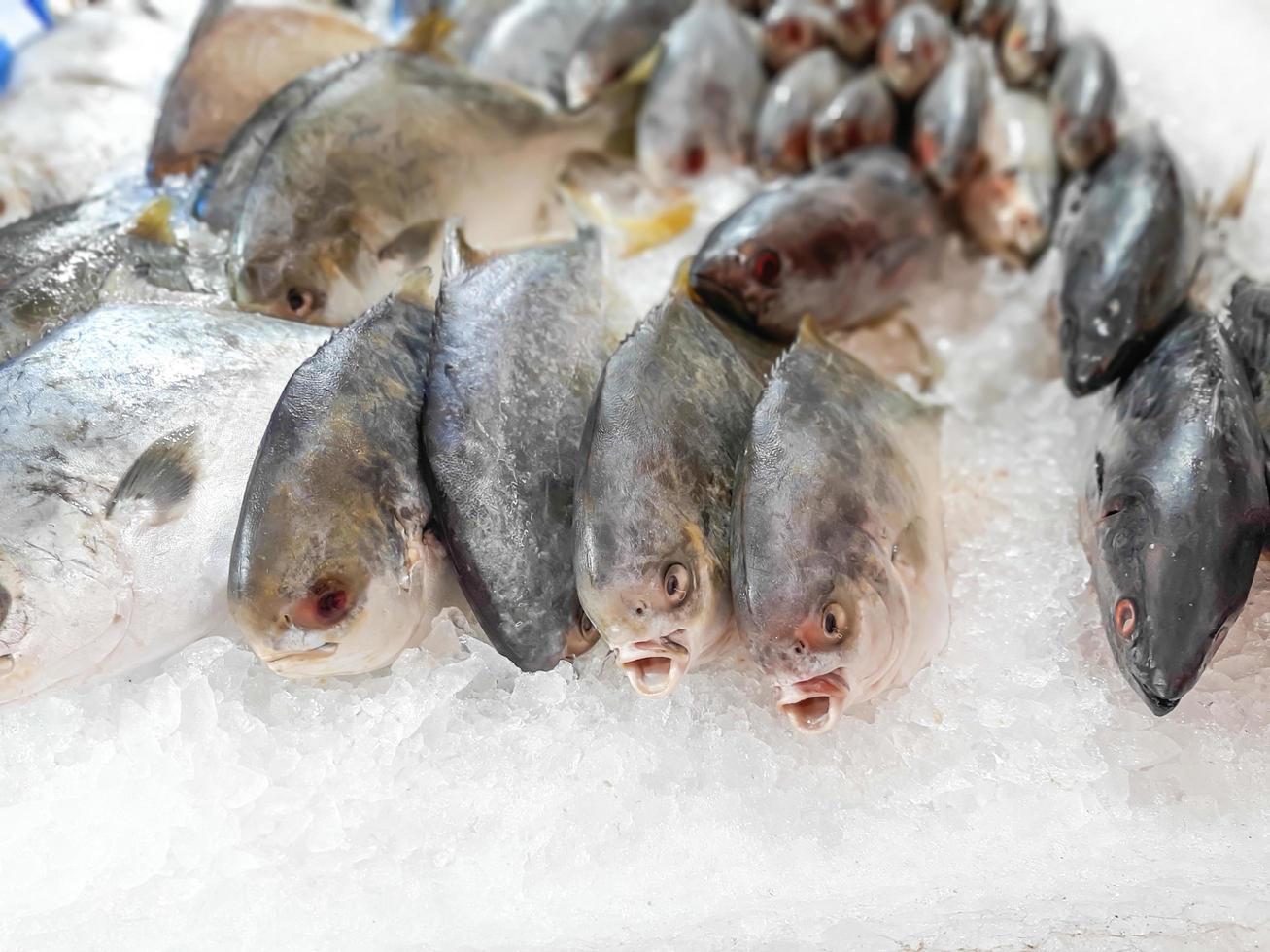 Cerrar pescado fresco crudo enfriándose sobre hielo en el mercado de mariscos cala foto
