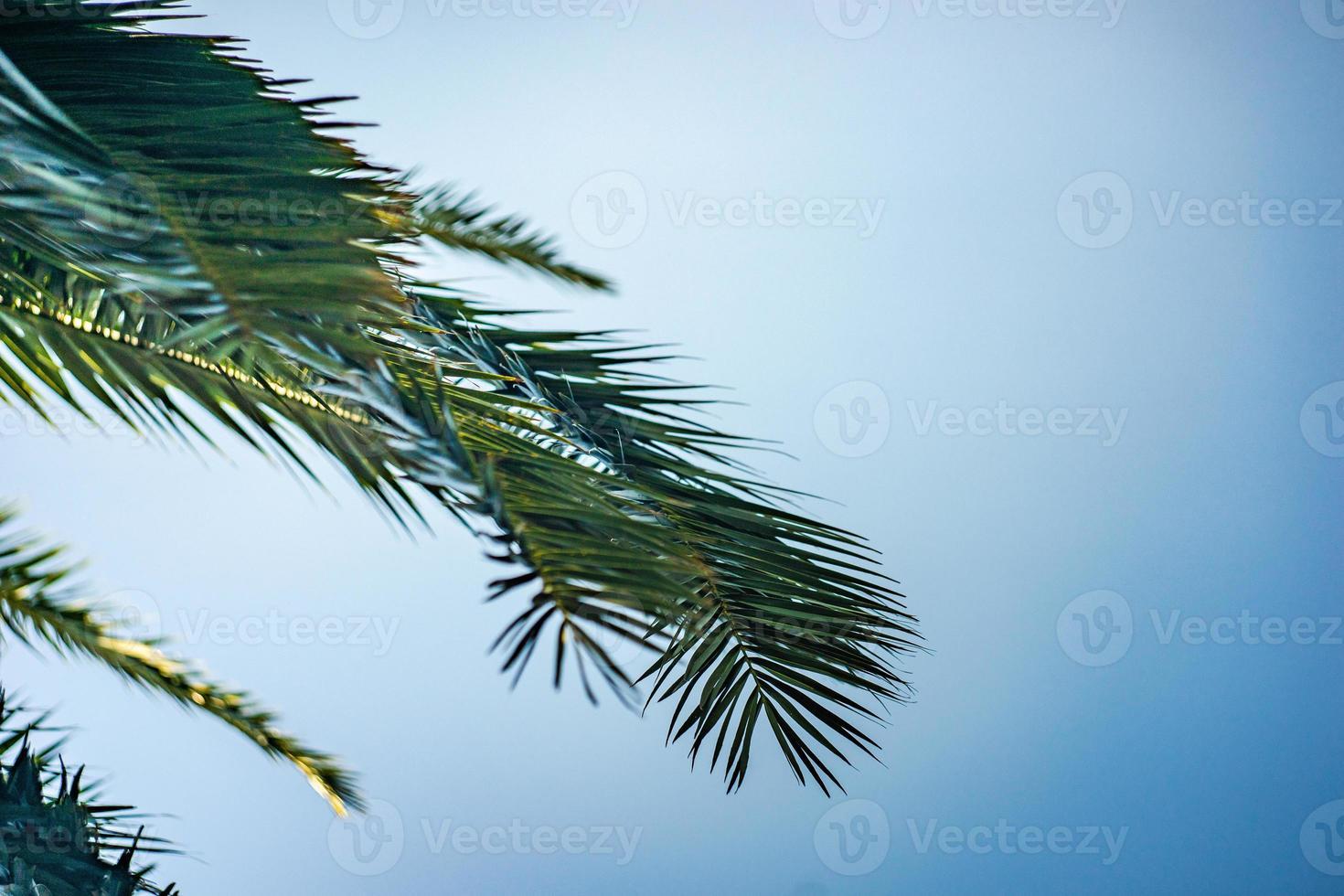 hojas de palmera como fondo natural foto