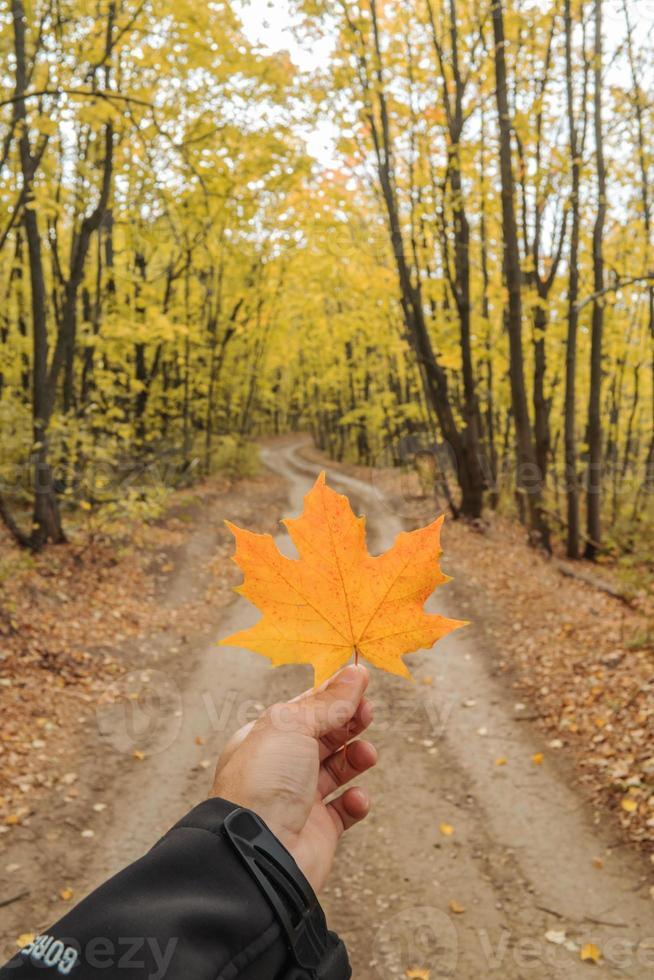 hoja de arce amarilla en la mano en la temporada de otoño. foto
