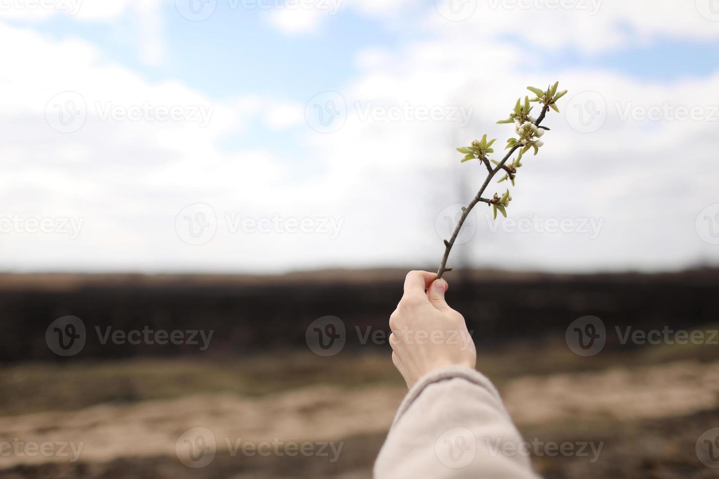 mano femenina sostiene una ramita verde sobre un fondo de hierba quemada y cielo. contaminación y restauración de la ecología foto