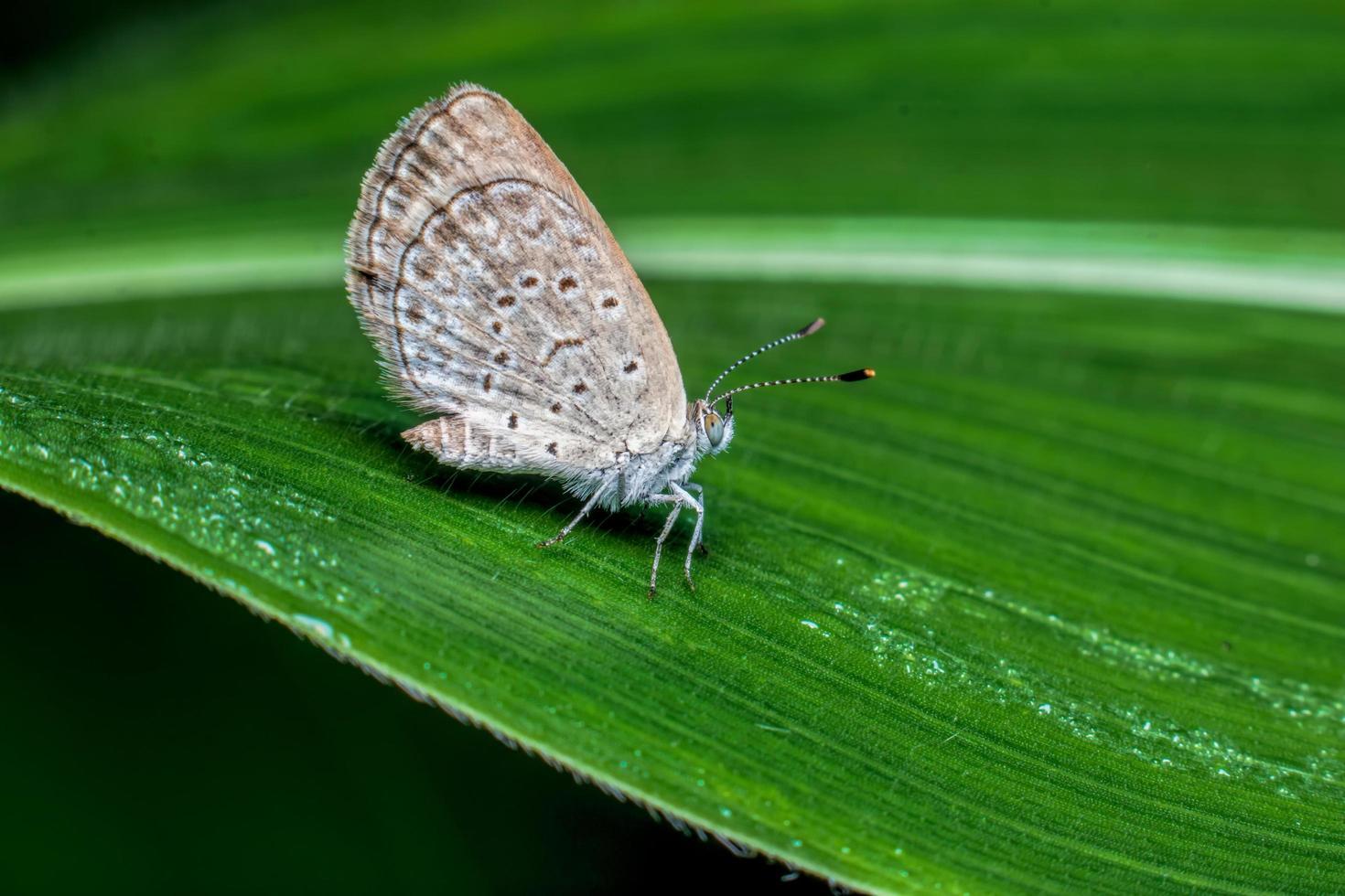primer plano de mariposa sobre una ramita. foto