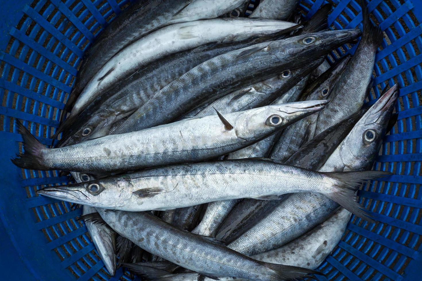 pescado de mar fresco vendido en el mercado. foto