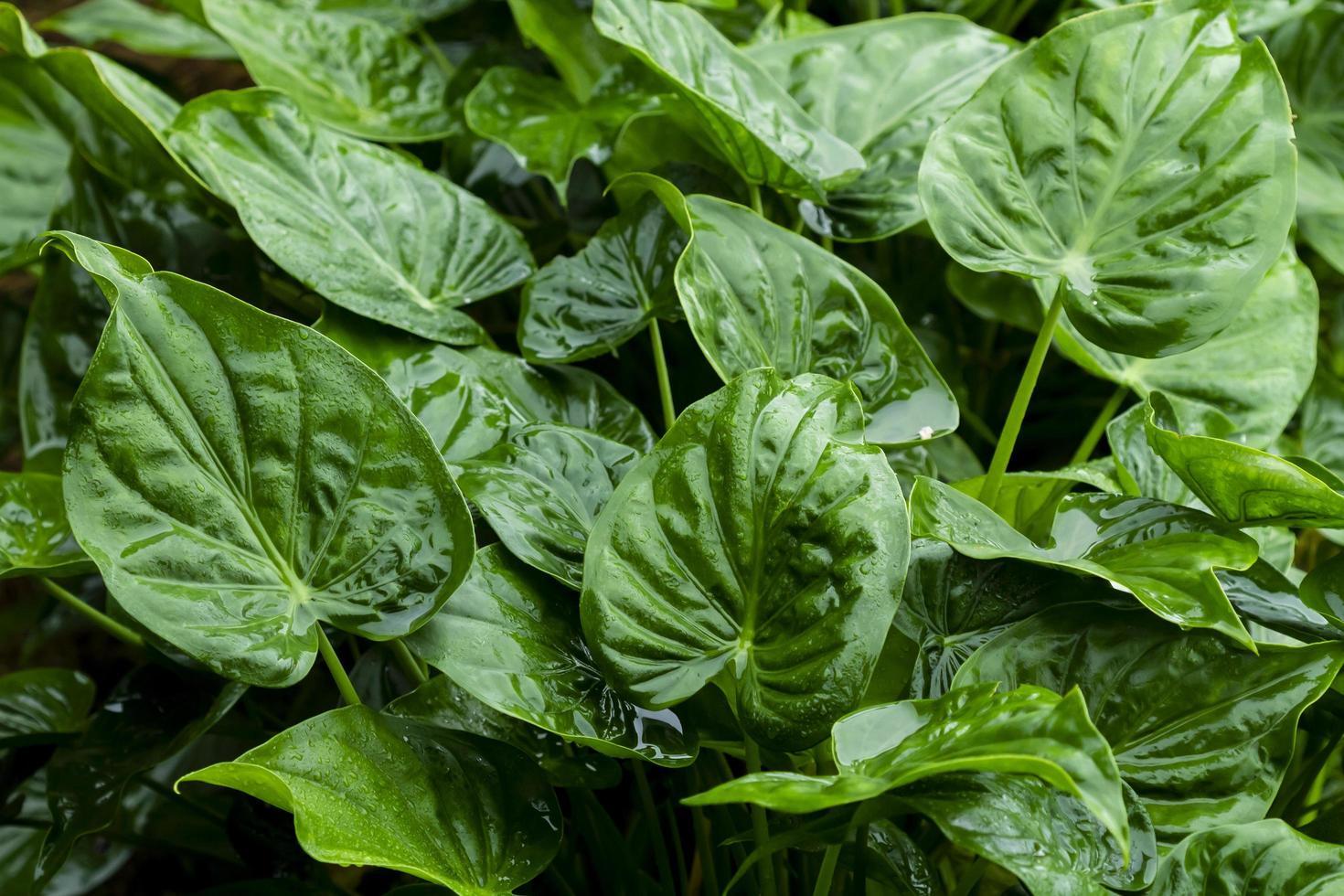 hojas verdes de cerca foto
