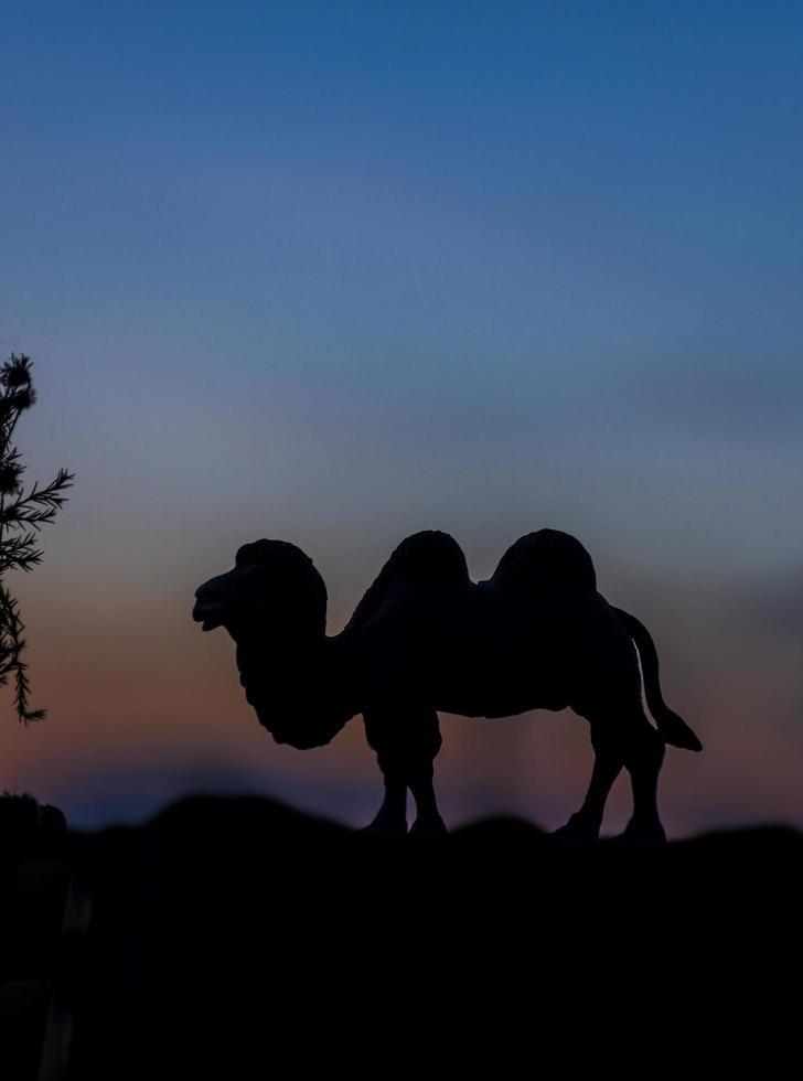 silueta, de, camello, animal, en, ocaso, plano de fondo foto