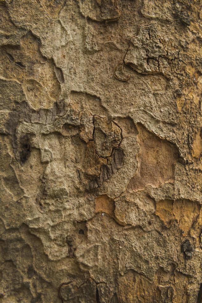 Fondo de textura de corteza de árbol de madera vieja. patrón de corteza de árbol foto