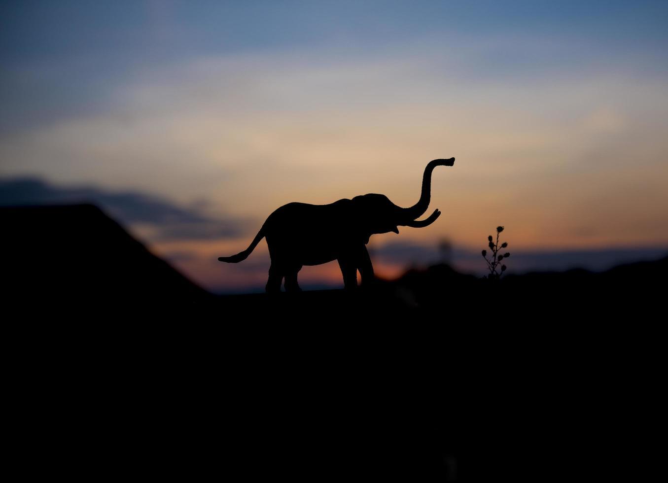 silueta, de, elefante, animal, en, ocaso, plano de fondo foto