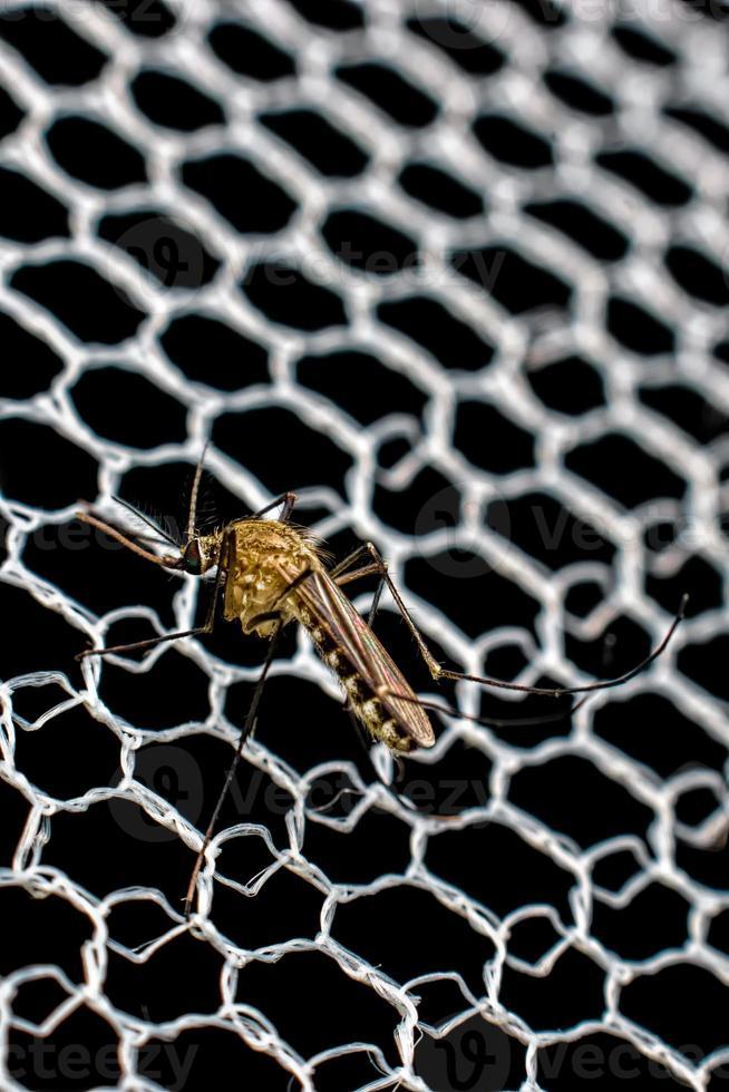 primer plano, de, mosquitos, en la red foto