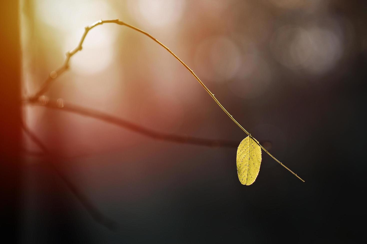 vista de naturaleza de primer plano de hoja sobre fondo verde borroso en el jardín con espacio de copia utilizando como fondo plantas verdes paisaje natural, ecología, concepto de papel tapiz fresco. enfoque suave. foto