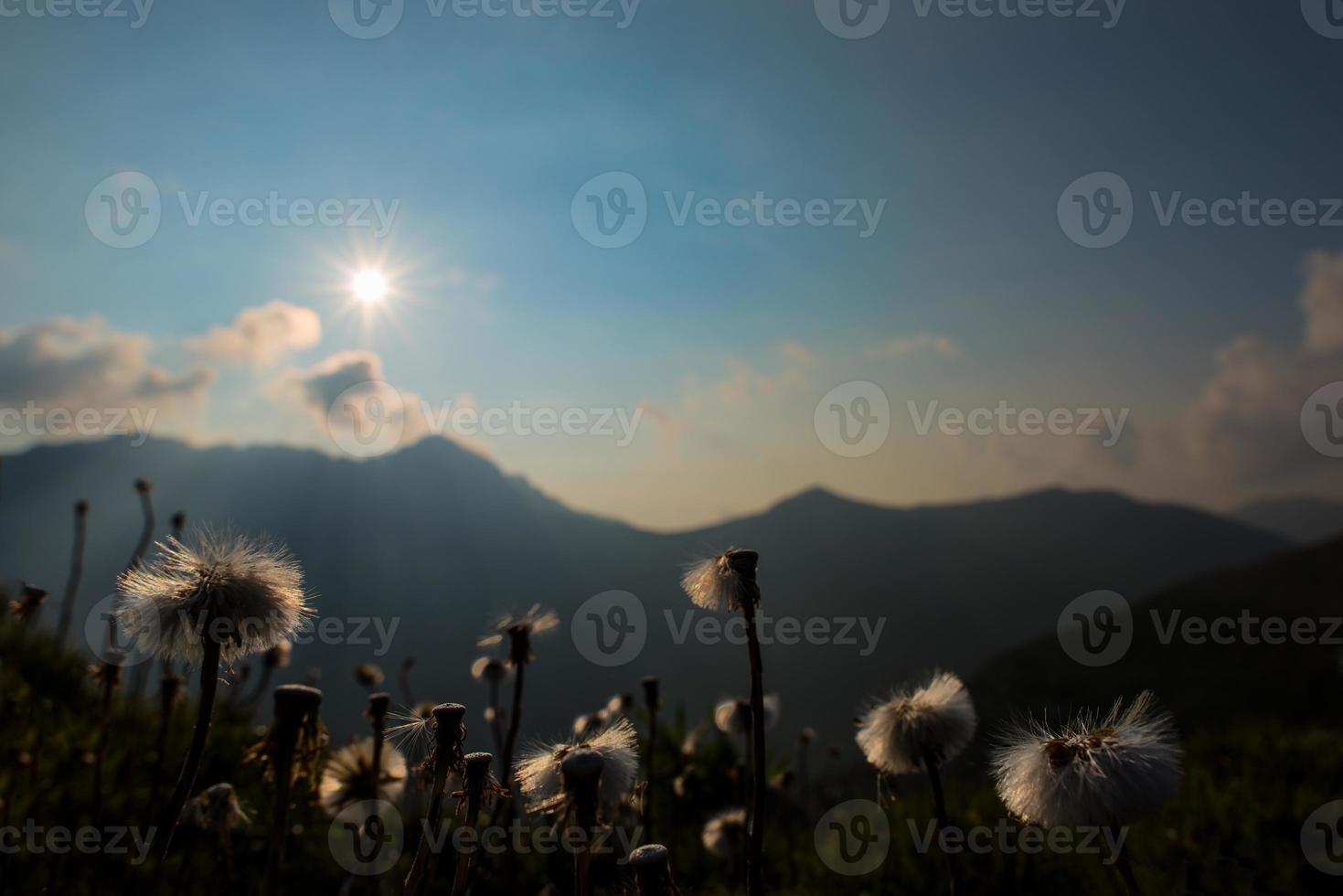flores de montaña con el último sol que brilla foto
