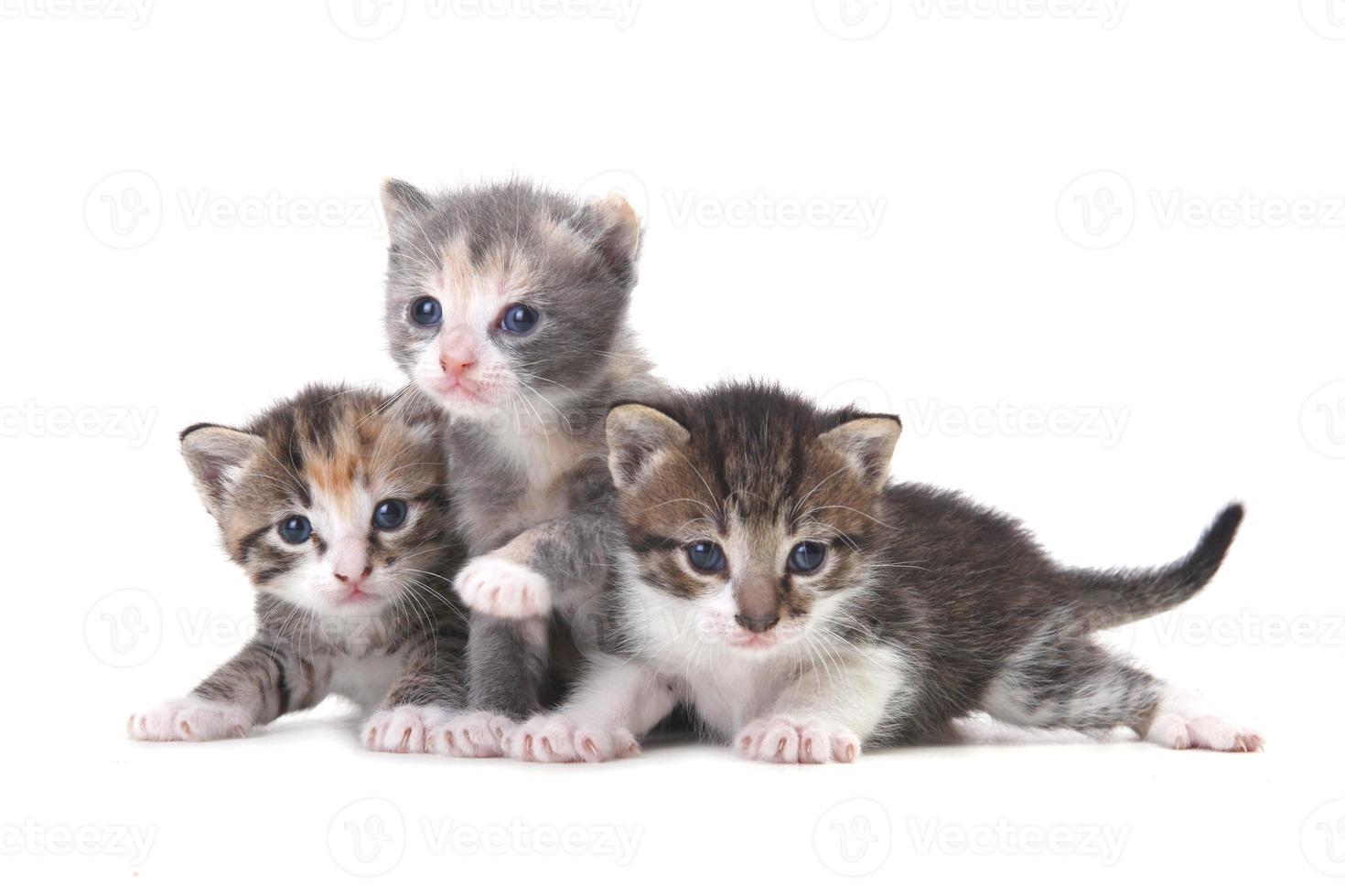 Tres gatitos bebé sobre un fondo blanco. foto