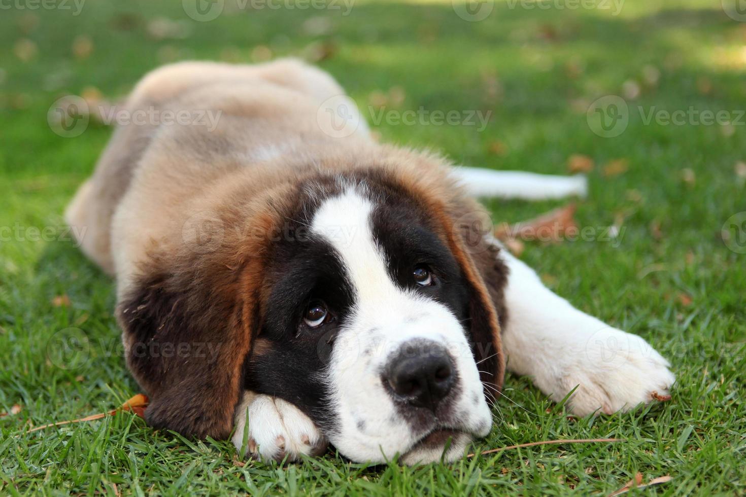 cachorro al aire libre en la hierba foto