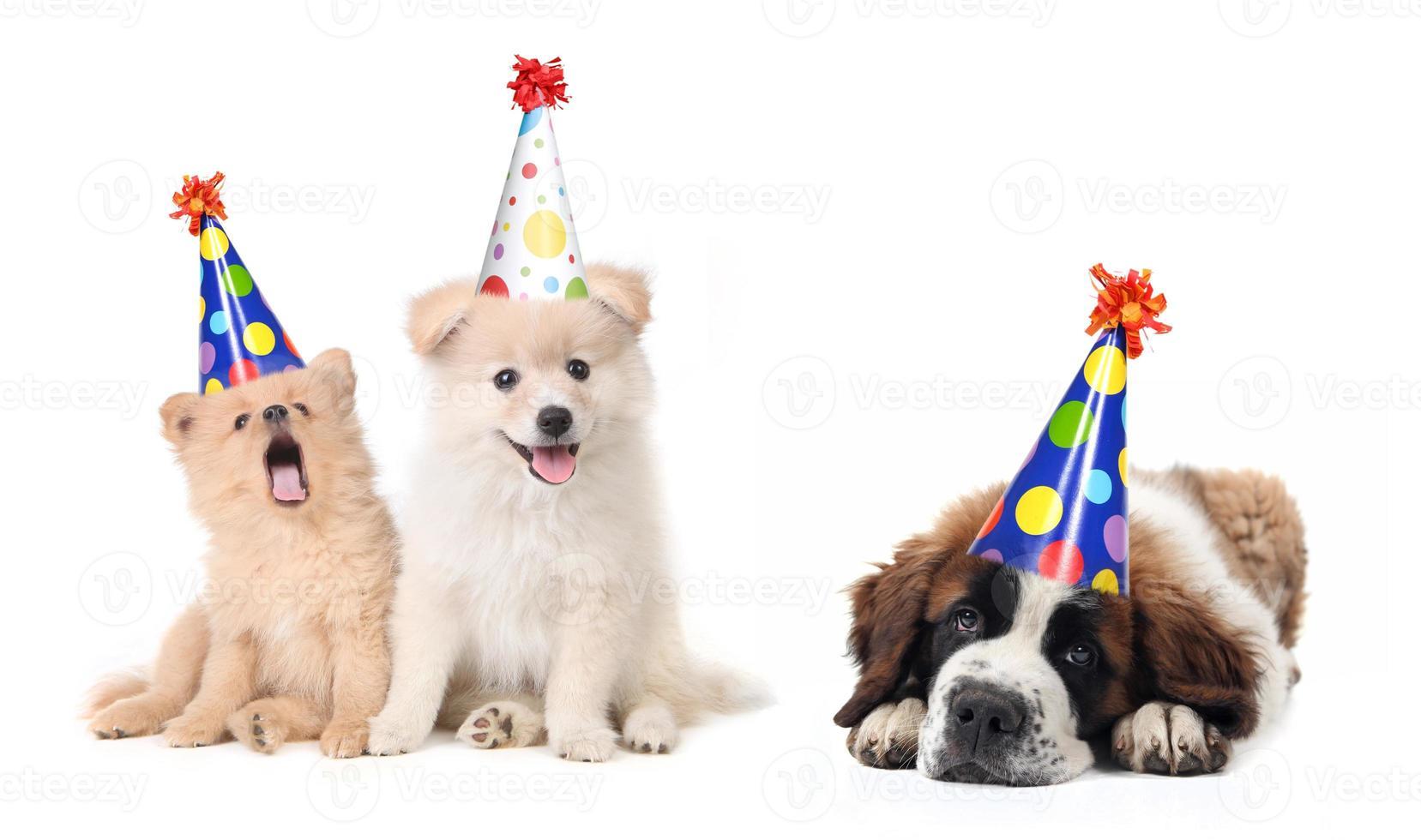 cachorros tontos celebrando cumpleaños foto