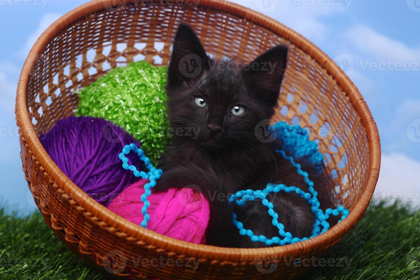 adorable gatito en un estuche lleno de hilo foto