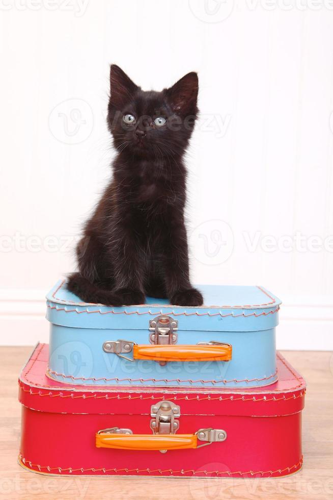Gatito negro sentado encima del equipaje en blanco foto