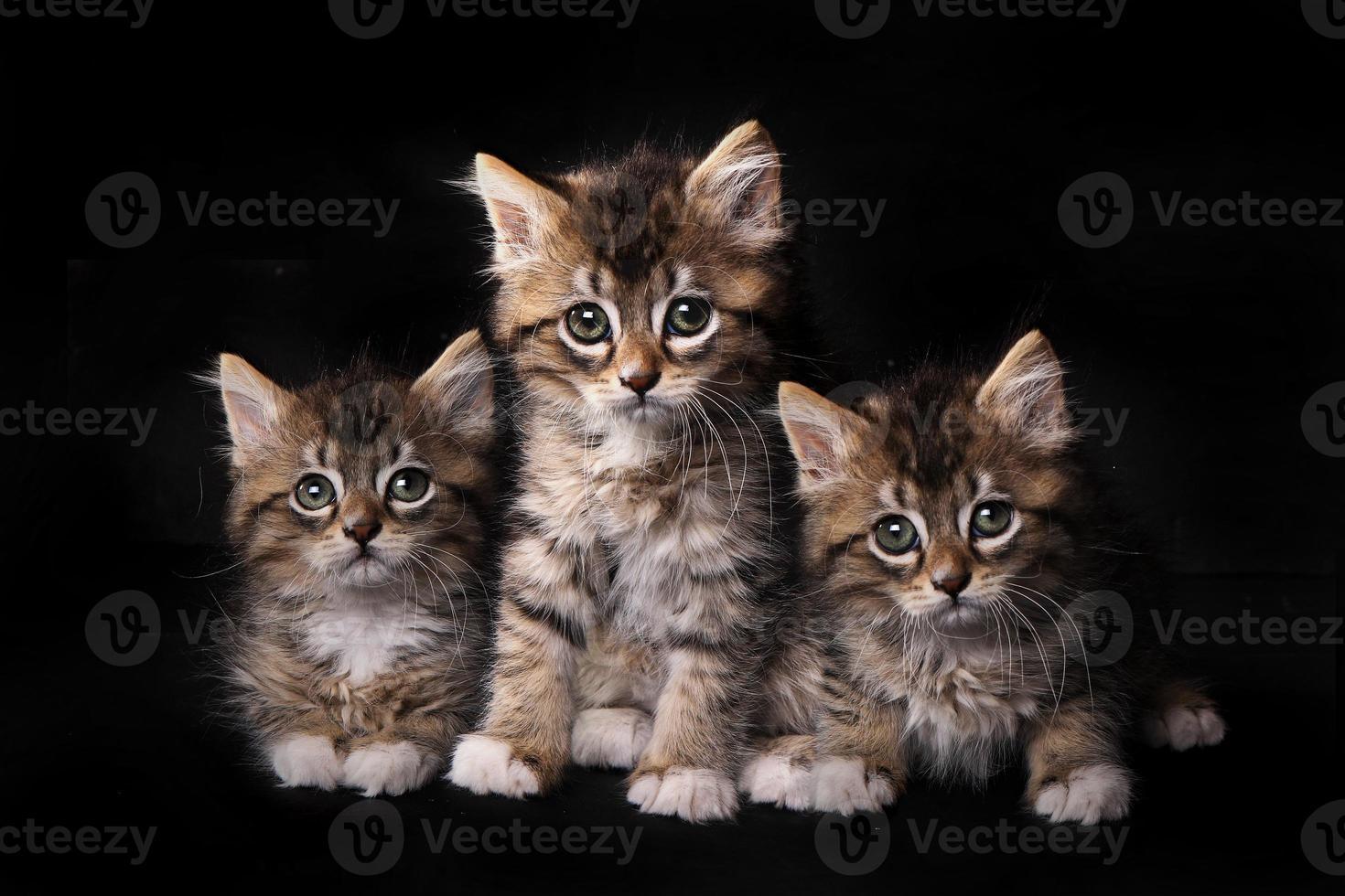 dulces adorables lindos gatitos en espera de adopción foto