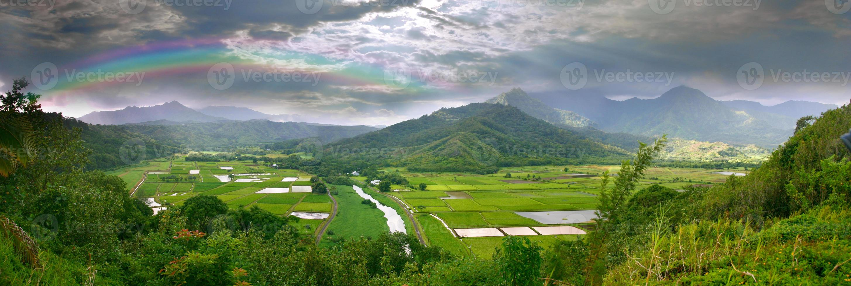 Panorama de los campos de taro en Kauai Hawaii foto