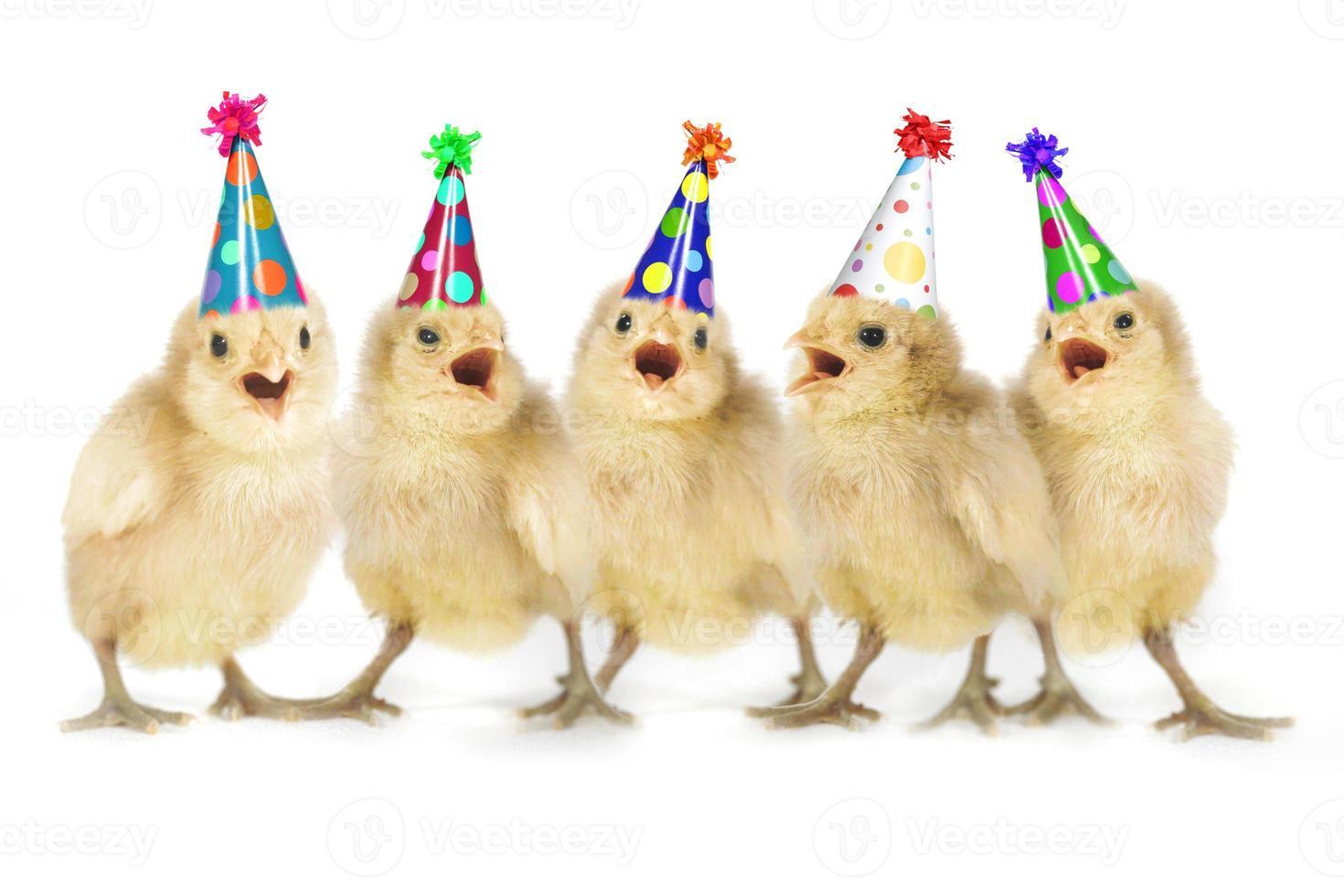 pollitos amarillos cantando feliz cumpleaños foto