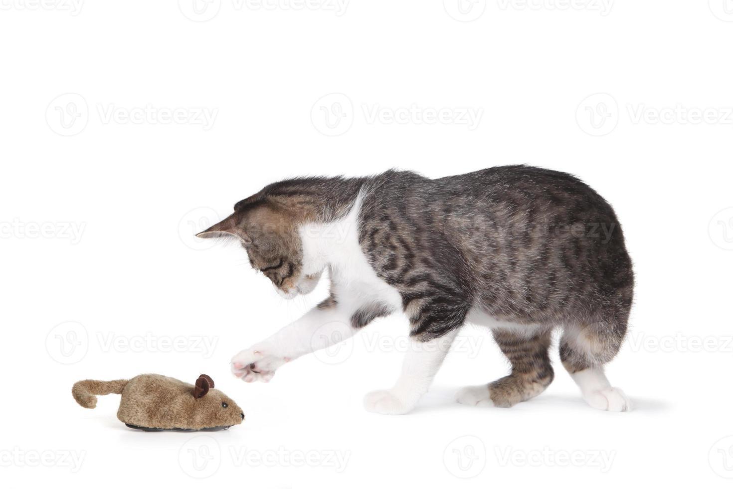 gato gracioso y ratón falso foto