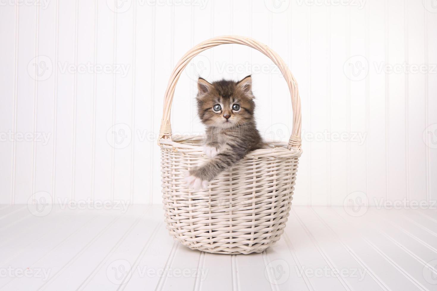 Gatito maincoon con ojos grandes en la canasta foto