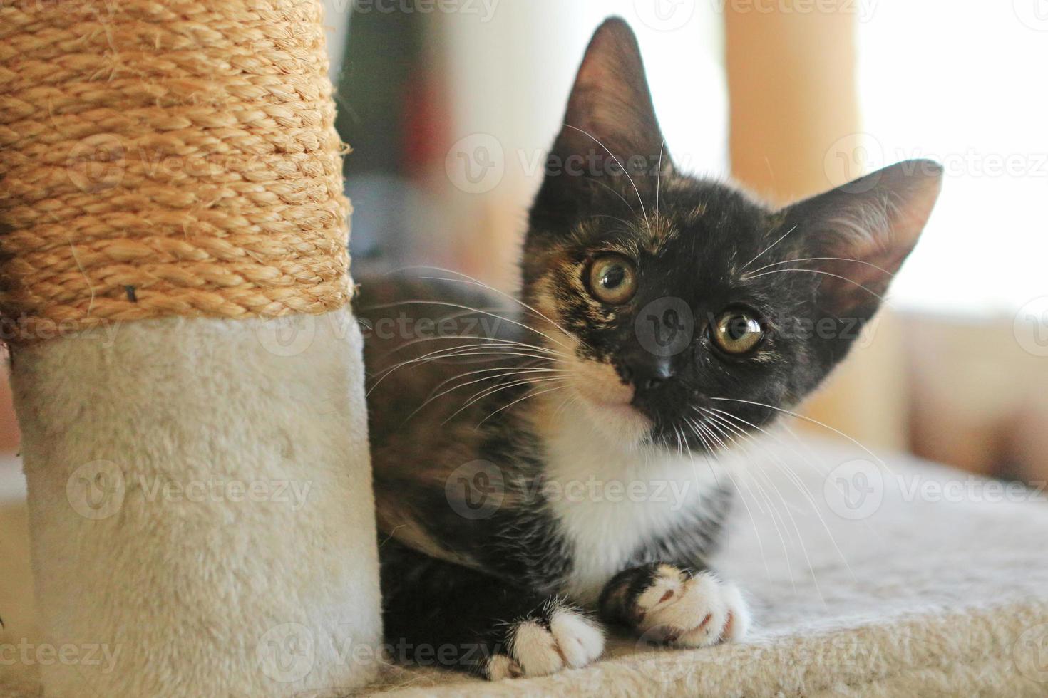 Bebé gato sentado en la torre de juegos con luz natural foto