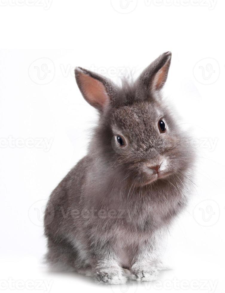 joven adorable conejito foto