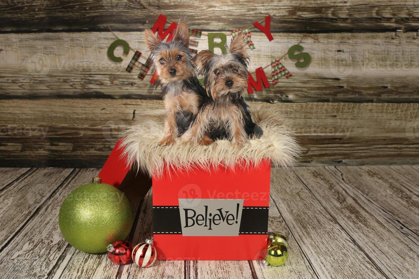 cachorros sobre un fondo temático navideño foto