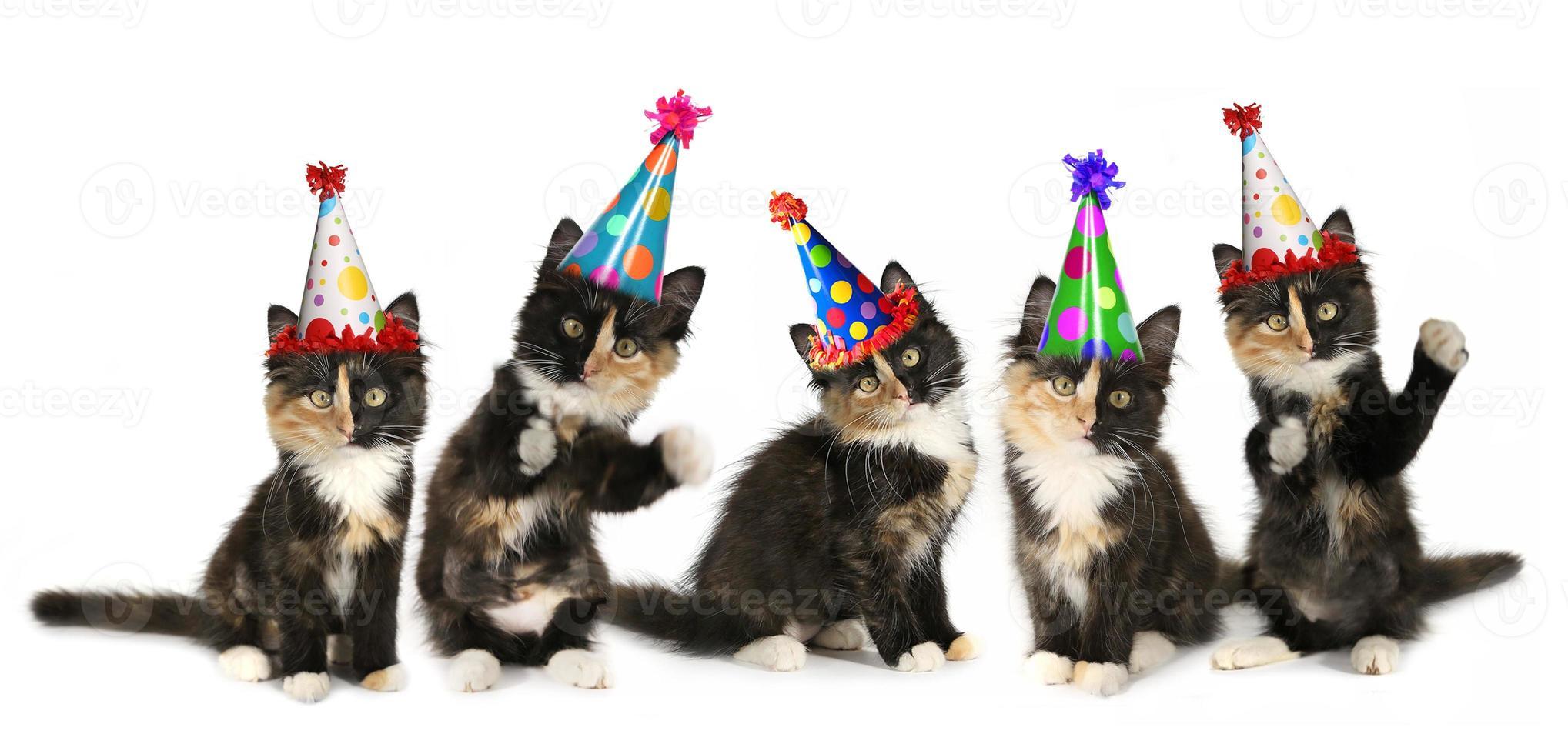 5 gatitos sobre un fondo blanco con gorros de cumpleaños foto