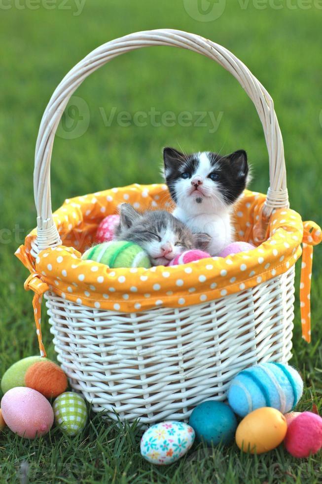 Adorables gatitos en una canasta de pascua de vacaciones foto