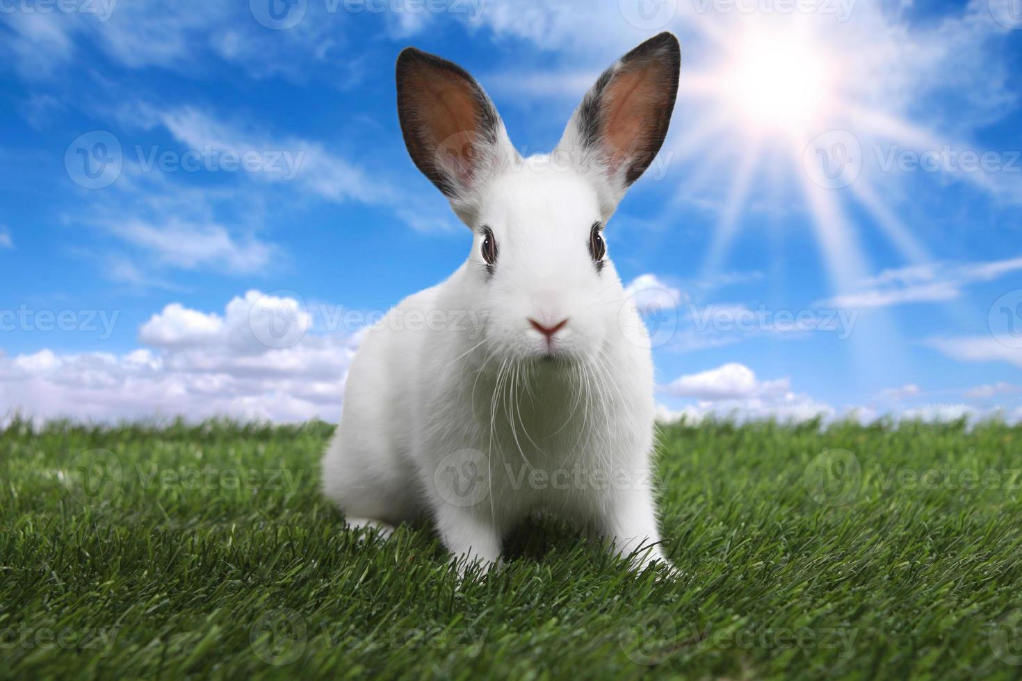 Conejo en la pradera de campo soleado sereno en primavera foto