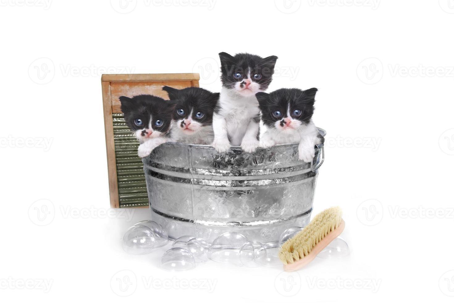 gatitos tomando un baño en una tina con cepillo y burbujas foto