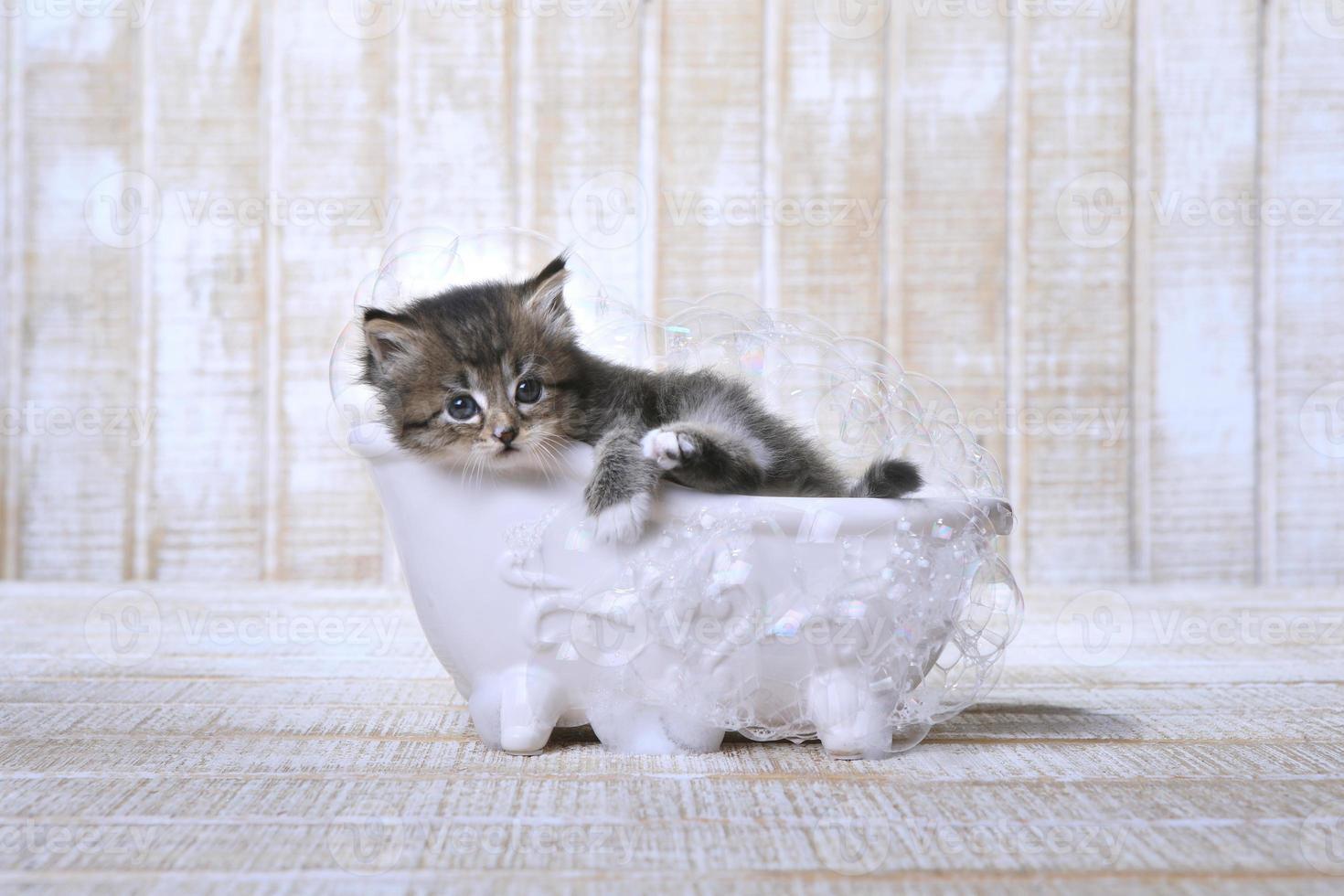 Gatito descansando en una bañera con patas con burbujas foto