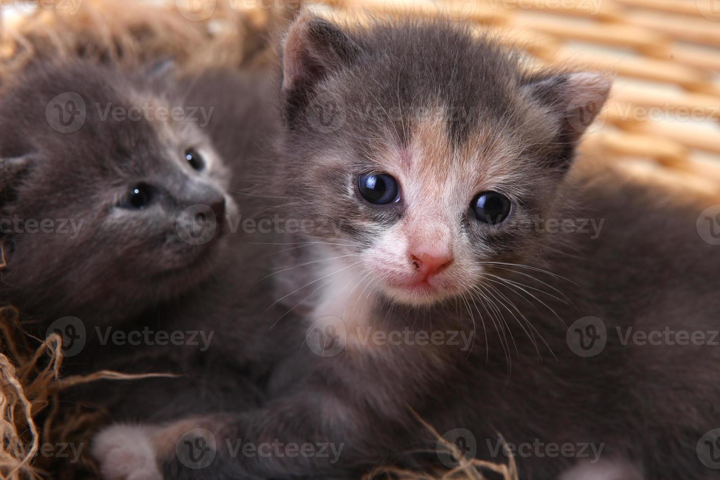gatito recién nacido en una canasta foto
