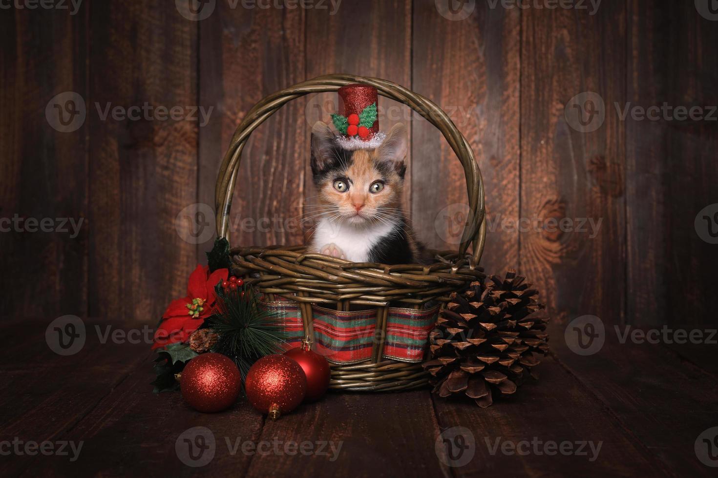 Gatito calico con temática navideña sobre fondo de madera foto
