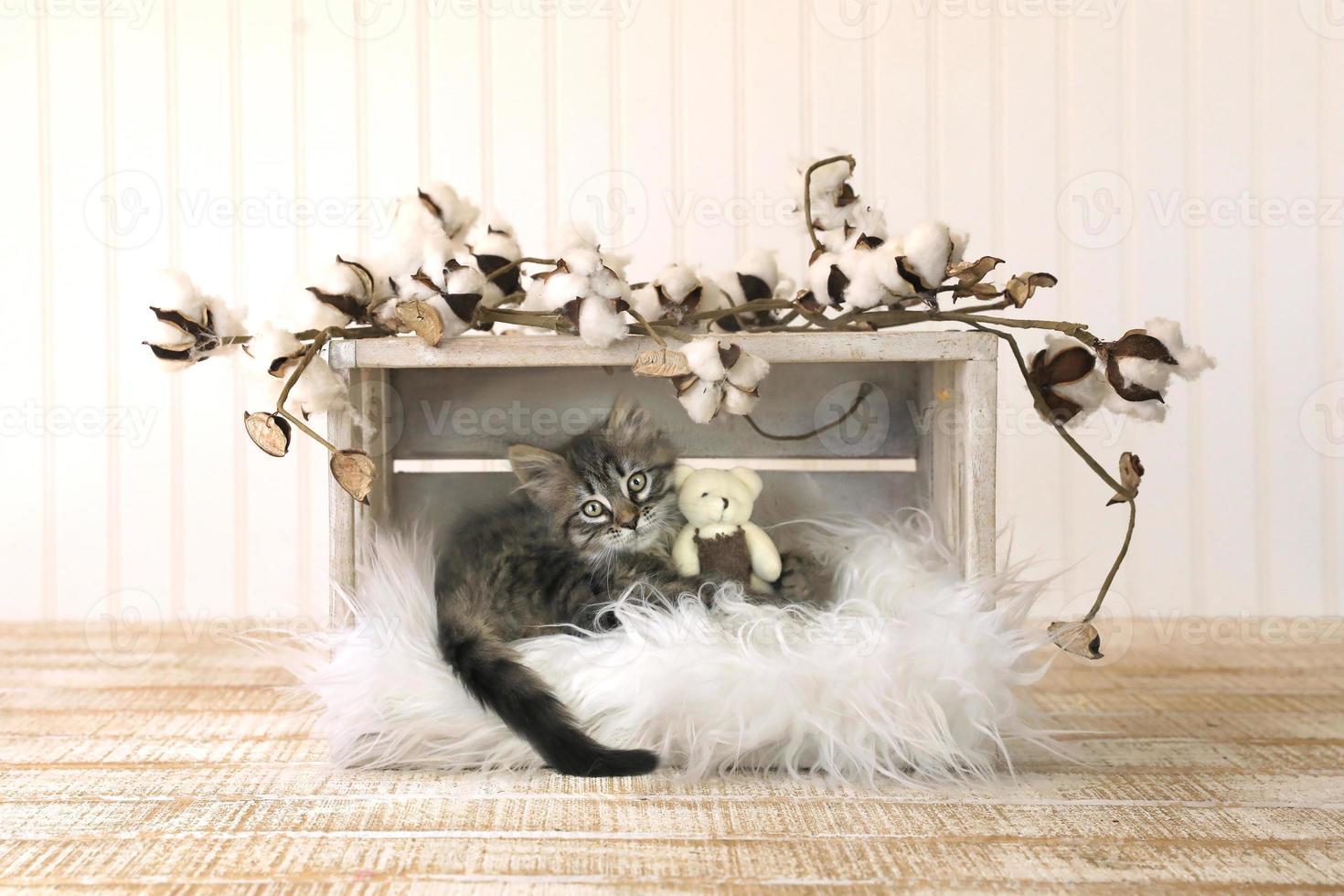 gatito con ositos de peluche y brotes de algodón foto