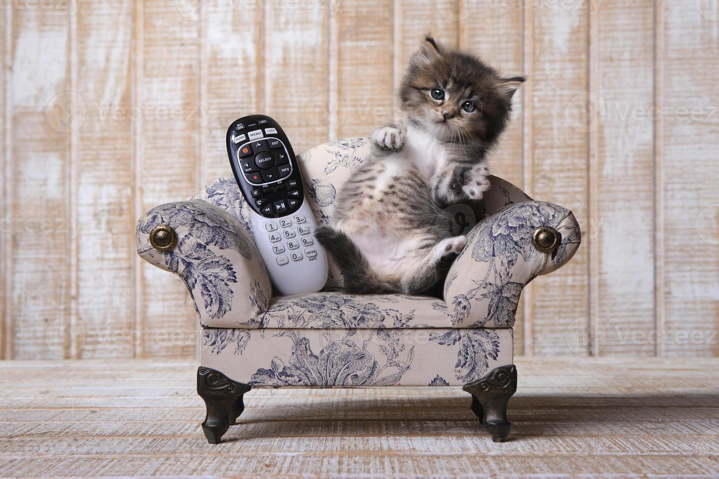 Adorable gatito relajándose en el sofá con control remoto foto