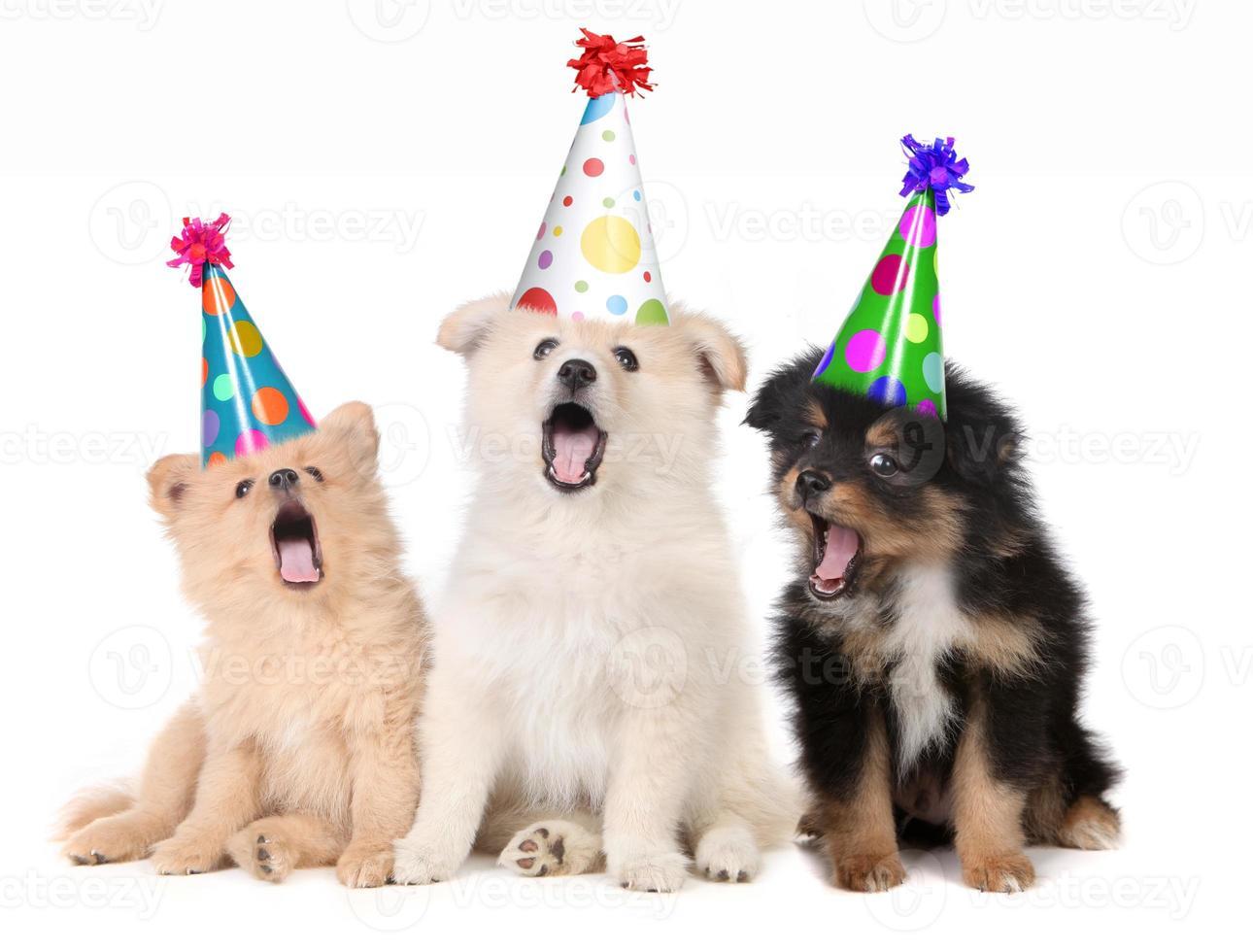 cachorros cantando la canción de feliz cumpleaños foto