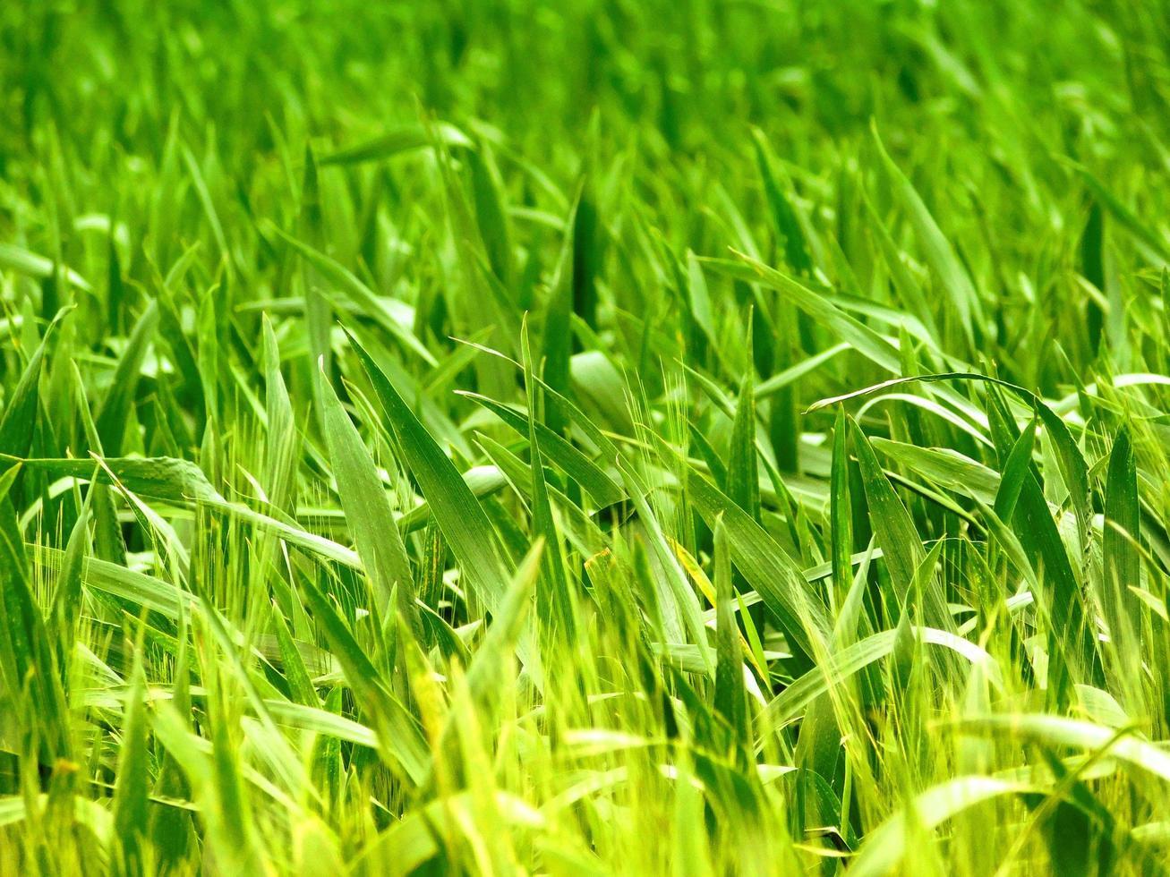 planta al aire libre en el jardín foto