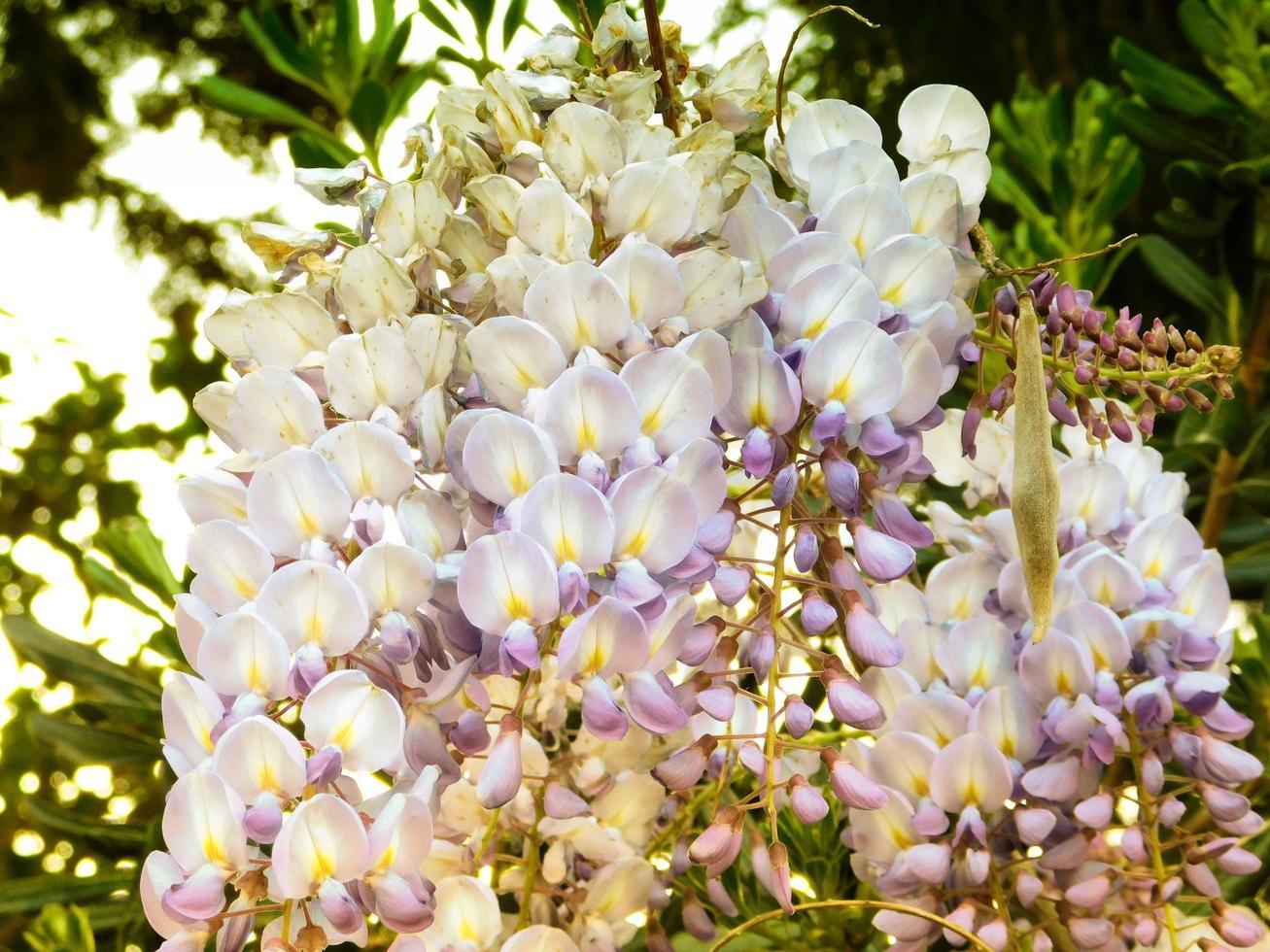 flores al aire libre en el jardín. foto