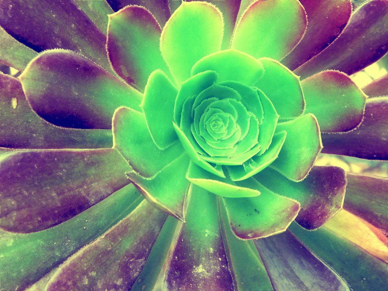 plantas en el jardin foto