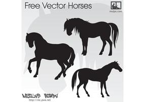 Caballos libres del vector